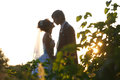 Gentle couple holding hands  on background leaves and sunset Royalty Free Stock Photo