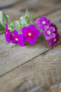 Gentle pink flower on table shallow depth of field Stock Photography