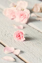Gentle pink rose on wooden table shallow depth of field Stock Photo