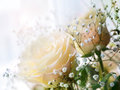 Gentle roses gypsophilas close up Royalty Free Stock Photo