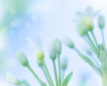 Gentle spring flowers beautiful white over blue blur sky background springtime nature soft focus fine art Stock Photography
