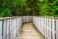 The Gentle Trail, at Blackwater Falls State Park, West Virginia. Royalty Free Stock Photo