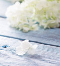 Gentle white flower petal with shallow depth of field Royalty Free Stock Photography