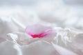 Gentle White Flower Petals Mac...