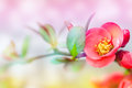 Gently blossom shallow depth of field Royalty Free Stock Images