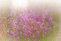 Gently purple flower in a meadow Stock Photo