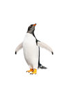Gentoo penguin over white background cute Stock Photography