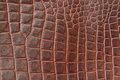 Genuine leather texture backgroundr close-up, embossed under the skin a reptile, brown color print. Natural backdrop