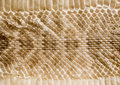 Genuine snake skin leather for texture and background. Royalty Free Stock Photo