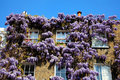 Georgian terraced town house with wisteria Royalty Free Stock Photo