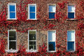 Georgian windows surrounded by ivy.Dublin.Ireland Royalty Free Stock Photo