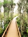 Georiga Swamp Boardwalk
