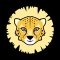 Gepard face Royalty Free Stock Photo