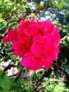 flor mi jardín