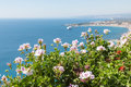 Geranium flowers with seascape at Sicily Royalty Free Stock Photo