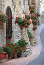Geranium Flowers In Streets Of...