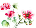 Geranium and peony flowers watercolor illustration Stock Image