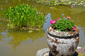 Geranium planter and pond pink geraniums in stone next to garden Royalty Free Stock Images