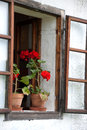 Geranium plants on windowsill two potted an old Royalty Free Stock Image