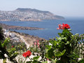 Geraniums, Bodrum - Turkey Stock Photography