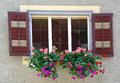 Geraniums in window box summer with shutters Royalty Free Stock Photography