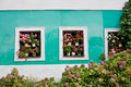 Geraniums in windows Stock Image