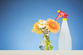 Gerber flowers and a spray bottle in glass vase next to plastic with blue background Stock Photos