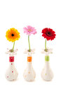 Gerber flowers in vases colorful isolated over white background Royalty Free Stock Image