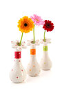 Gerber flowers in vases colorful isolated over white background Royalty Free Stock Photography