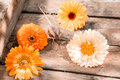 Gerbera daisies in a wooden crate fresh colourful orange for seasonal summer background Stock Photos