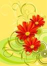 Gerbera flower background design Royalty Free Stock Photo