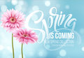 Gerbera Flower Background and Spring is coming Lettering. Vector Illustration Royalty Free Stock Photo
