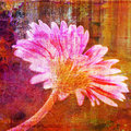 Gerbera flower digital illustration Stock Image