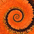 Gerbera flower infinity spiral abstract background Royalty Free Stock Photo