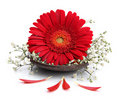 Gerbera flower on spa spoon Stock Photo
