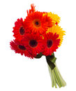 Gerbera flowers bouquet isolated on white background Royalty Free Stock Photo