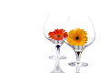 Gerbera flowers in cognac glass Royalty Free Stock Image