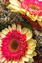 Gerbera flowers in a composition Royalty Free Stock Photo