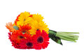 Gerbera flowers posy isolated on white background Royalty Free Stock Photo