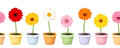 Gerbera in pots horizontal seamless background vector with colorful flowers flowerpots Stock Image