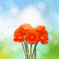 Gerberas in vase Stock Photos