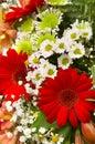 Gerbers And Flowers