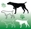German pointer dog Royalty Free Stock Photo