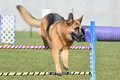 German Shepherd at a Dog Agility Trial Royalty Free Stock Photo