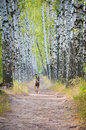 German Shepherd Dog runs along the path in park Royalty Free Stock Images