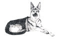 German shepherd ink sketch of laying Royalty Free Stock Photo