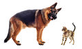 German shepherd and kitten Royalty Free Stock Photos