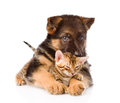 German shepherd puppy dog embracing little bengal cat. isolated Royalty Free Stock Photo