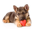 German shepherd puppy dog with a red heart isolated on white Royalty Free Stock Image