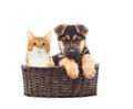 German Shepherd puppy and kitten in a straw basket Royalty Free Stock Photo